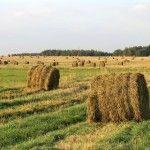 Jakie-problemy-maja-niemieccy-rolnicy